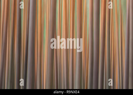 Abstract image of motion blurred Scots Pine (Pinus sylvestris) tree trunks in coniferous forest - Stock Photo