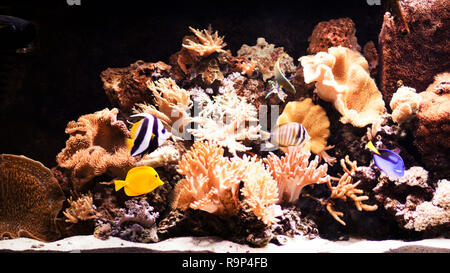 autiful planted tropical freshwater aquarium with fishes - Stock Photo