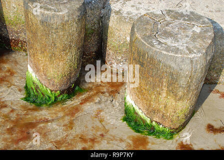 Coast protection at the baltic sea (Darss, Western beach, Germany): groynes. In the ocean, groynes create beaches or prevent them being washed away by - Stock Photo