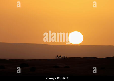 A caravan of camels silhouetted against rising sun in the Sahara desert near Merzouga Morocco. - Stock Photo