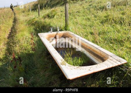 Old fashioned bathtub used as feeding trough for cattle on Fetlar.