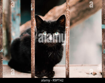 iron rusted railings and black cat standing between. black stray cat close-up - Stock Photo
