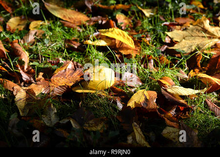 Autumn leaves on a meadow in the park - Stock Photo