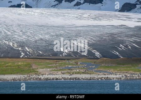 South Georgia, St. Andrews Bay, Allardyce mountains. Home to largest king penguin colony in South Georgia. King penguins along glacial melt river in f - Stock Photo