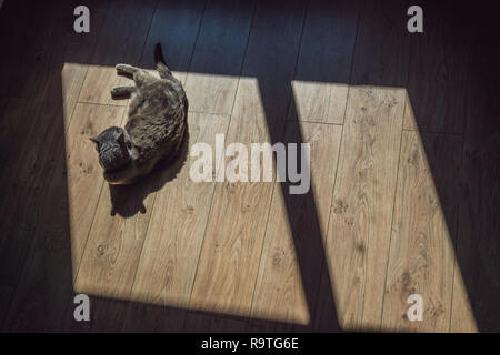 Gray cat sunning in front of the window - Stock Photo