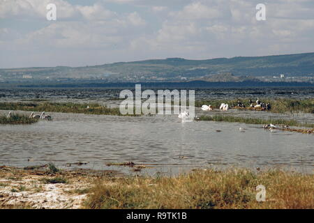 Colorful algae at the shores of Lake Nakuru, Rift Valley - Stock Photo