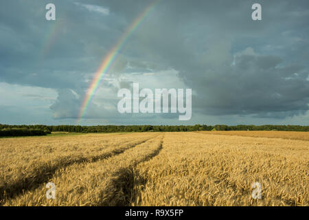 Traces of wheels in cereals, forest on the horizon and a rainbow on a cloudy sky - Stock Photo