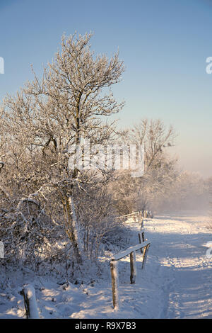 Trees at the field edge in winter - Stock Photo