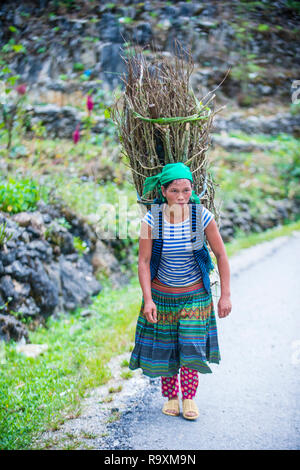 HA GIANG , VIETNAM - SEP 15 : Vietnamese farmer in a countrside near Ha Giang Vietnam on September 15 2018. nearly 80 percent of the population of Vie - Stock Photo