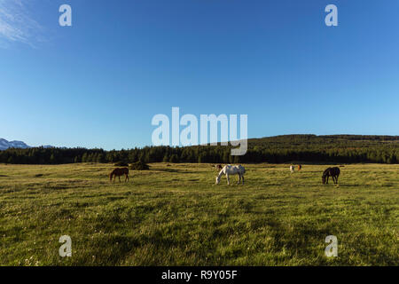 Scenic view of Wild horses grazing on a meadow near a lagoon against Andes mountains range in Esquel, Patagonia, Argentina. - Stock Photo