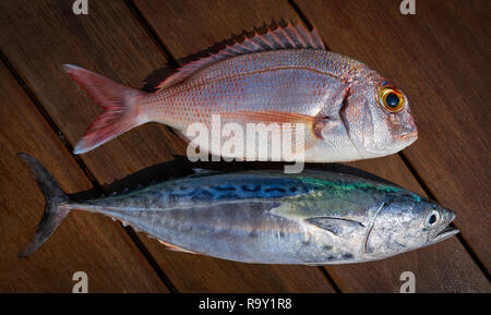 Snapper fish and little tunny tuna fish catch on wooden board - Stock Photo