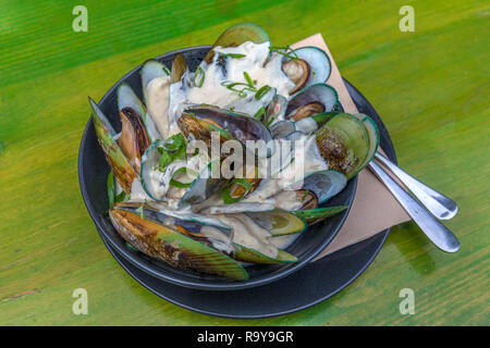 Green lipped mussels, Waikato, Coromandel Peninsula, North Island, New Zealand - Stock Photo