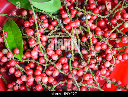 Antidesma thwaitesianum puncticulatum Miq / Antidesma bunius Fresh red wild berry in Asia - Stock Photo