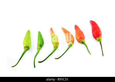 chili pepper isolated / hot chilli peppers green orange to red on white background - Stock Photo
