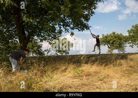 30.08.2016, Olanesti, Rajon Stefan Voda, Republik Moldau - Junge Maenner ernten Wallnuesse an einer Landstrasse. Alleen mit Walnussbaeumen sind ein ty - Stock Photo