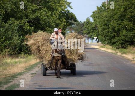 30.08.2016, Olanesti, Rajon Stefan Voda, Republik Moldau - Bauern auf einem Pferdefuhrwerk transportieren Heu. Im Hintergrund Walnussbaeume. 00A160830 - Stock Photo