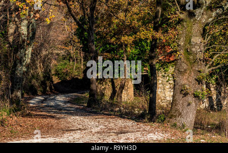 road among the colorful autumn woods in the Italian valley of Comino - Stock Photo