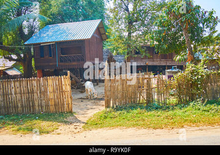 The stilt houses of the local farmer with small calf, grazing in yard behind the fence, Ava (Inwa), Myanmar. - Stock Photo