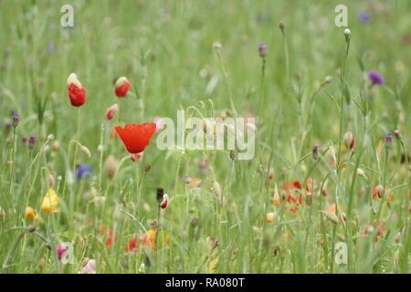 Wild flower bed - Stock Photo