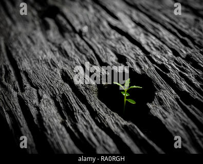 Shoot growing on dead wood, a message of hope and inspiration - Stock Photo