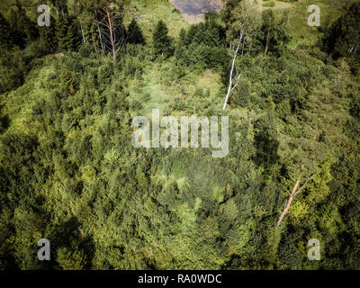 Aerial Drone Photo of the Countryside Forest, Top Down View in Sunny Summer Day - Background Material - Stock Photo