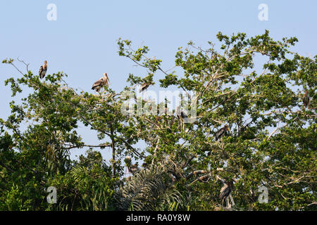 Painted stork on a tree - Stock Photo
