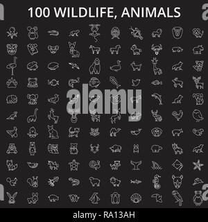 Wildlife, animals editable line icons vector set on black background. Wildlife, animals white outline illustrations, signs, symbols - Stock Photo