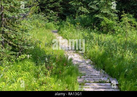 Boardwalk on Babcock Falls Trail in British Columbia, Canada - Stock Photo