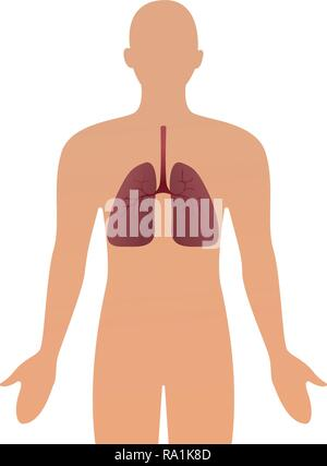 Human silhouette with inflamed respiratory system lungs showing diseases like asthma and bronchitis vector illustration. - Stock Photo