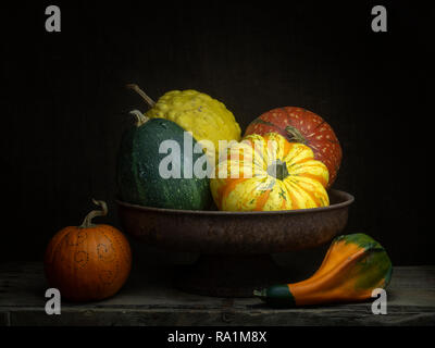 Ornamental gourds, pumpkins, winter squashes in rusty bowl. Still life. Chiaroscuro, baroque style light painting. - Stock Photo