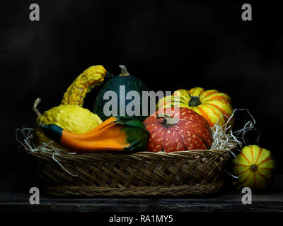 Ornamental gourds, pumpkins, winter squashes in basket. Still life. Chiaroscuro, baroque style light painting. - Stock Photo