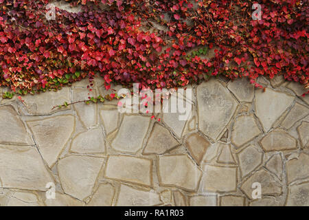 wall with red leaves structure background vintage - Stock Photo