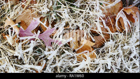 Frozen autumn leaves after an ice storm in Alpine, Texas - Stock Photo