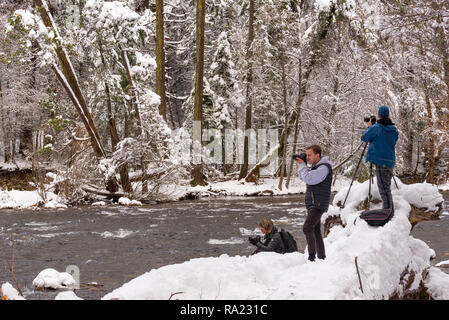 Jan 25 2017 Yosemite Valley USA: Keen photographers stand on a snow covered fallen tree to capture the valley from a different angle - Stock Photo