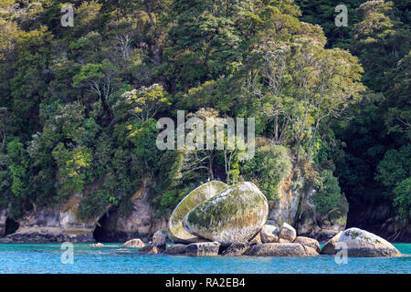 Split Apple Rock seen from the water with caves and rocky outcrops behind, Abel Tasman National Park. The tree in flower is the kamahi (Weinmannia rac - Stock Photo