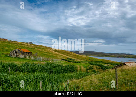 A croft house on a hillside overlooking the North Sea with propering crops in the foreground on the Mainland of the Shetland Islands of Scotland - Stock Photo