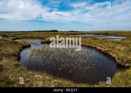 The largest blanket bog and peatland in Europe of Forsinard Flows Nature Reserve in the Scottish Highlands of northern Scotland - Stock Photo
