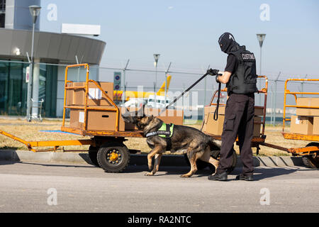 Customs and border protection officer and Drug enforcement administration special force participates with a specialized dog in a training at the airpo - Stock Photo