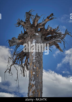 An upside down tree with roots in the sky - Stock Photo