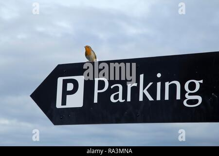 Robin on parking sign, Carrick-a-Rede Rope Bridge, Ballintoy, Co. Antrim, Northern Ireland, Great Britain - Stock Photo