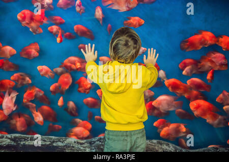 Little boy, kid watching the shoal of fish swimming in oceanarium, children enjoying underwater life in Aquarium - Stock Photo