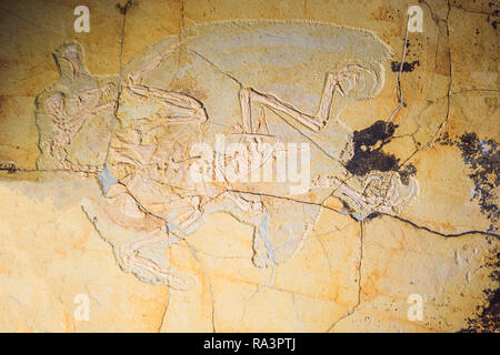 Beijing China, October 16, 2018: terodactyl Fossil, Pterodactilus Spectabilis, Fossil of prehistoric animals, Fossil trilobite imprint in the sediment, Dinosaur fossil - Stock Photo
