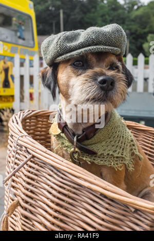 Boarder terrier dressed up wearing a flat cap and sitting in a bicycle wicker basket.Woodhall Spa 1940's festival Weekend. Lincolnshire, England, UK - Stock Photo