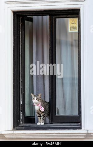 Cat of WikiLeaks founder Julian Assange looks out the window of the Ecuadorian Embassy, Kensington, London, United Kingdom - Stock Photo