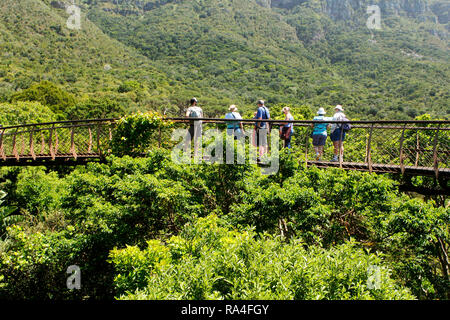 Visitors on the boomslang canopy walkway in Kirsenbosch National Botanical Garden in Cape Town, Western Cape Province, South Africa. - Stock Photo