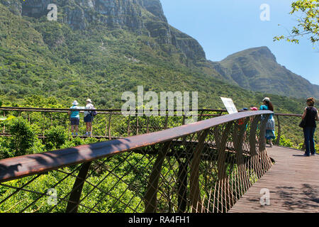 Visitors on the boomslang canopy walkway in Kirstenbosch National Botanical Garden in Cape Town, Western Cape Province, South Africa. - Stock Photo