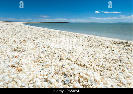 Famous Shell Beach in the World Heritage listed Shark Bay. - Stock Photo