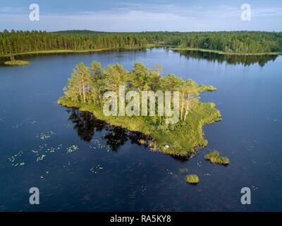 Drone shot, boreal, arctic conifers on small island in lake, water lily leaves, Jävre, Norbottens län, Sweden - Stock Photo
