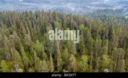 Drone shot, boreal, arctic conifers with fog, forest, Salla, Lappi, Finland - Stock Photo