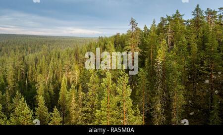 Drone shot, boreal, arctic conifers, forest, Salla, Lappi, Finland - Stock Photo
